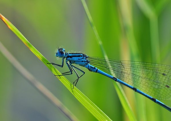 dragonfly-540839_640